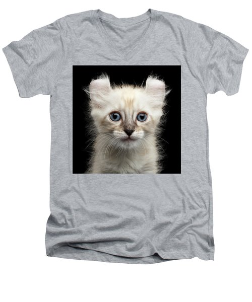 Cute American Curl Kitten With Twisted Ears Isolated Black Background Men's V-Neck T-Shirt by Sergey Taran
