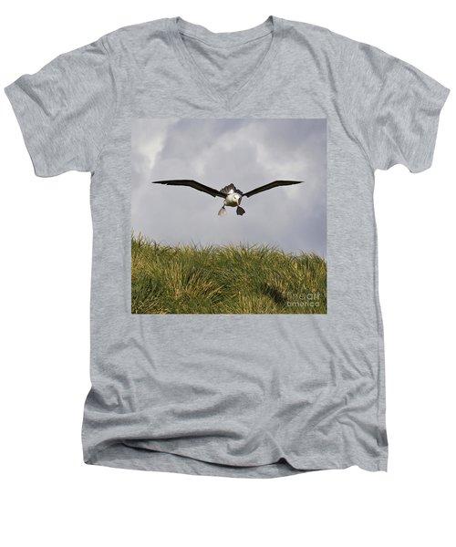 Black-browed Albatross Men's V-Neck T-Shirt