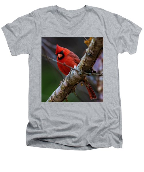 A Cardinal In Spring   Men's V-Neck T-Shirt