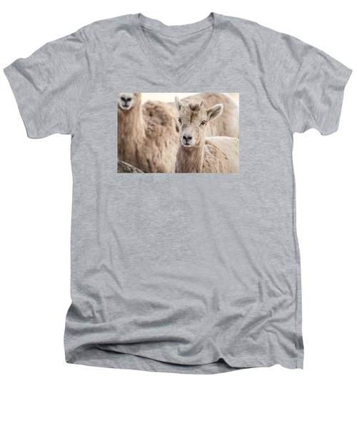 Men's V-Neck T-Shirt featuring the photograph A Little Lamb Cuteness by Yeates Photography