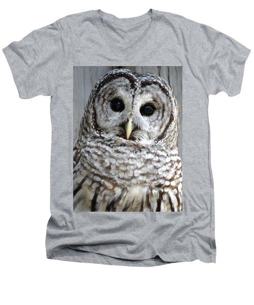 Adorable Barred Owl  Men's V-Neck T-Shirt