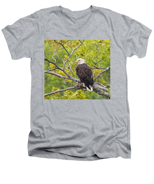 Men's V-Neck T-Shirt featuring the photograph Adult Bald Eagle by Debbie Stahre
