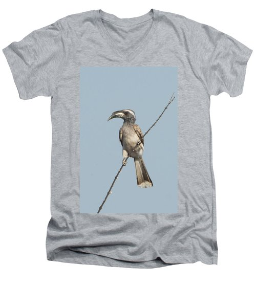 African Grey Hornbill Tockus Nasutus Men's V-Neck T-Shirt by Panoramic Images