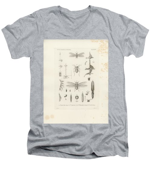 African Termites And Their Anatomy Men's V-Neck T-Shirt by W Wagenschieber