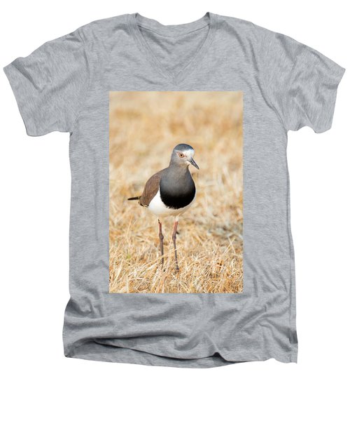 African Wattled Lapwing Vanellus Men's V-Neck T-Shirt by Panoramic Images