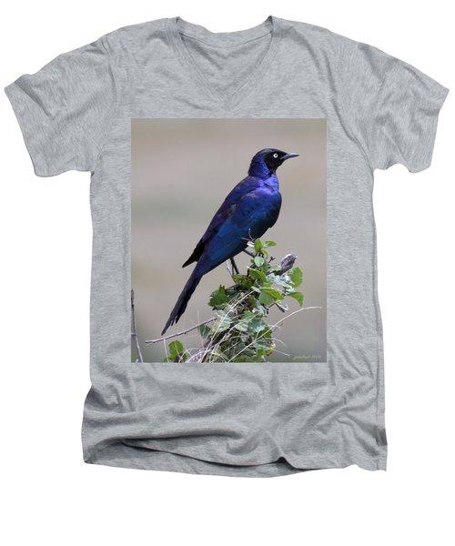 African White Eye Starling Men's V-Neck T-Shirt