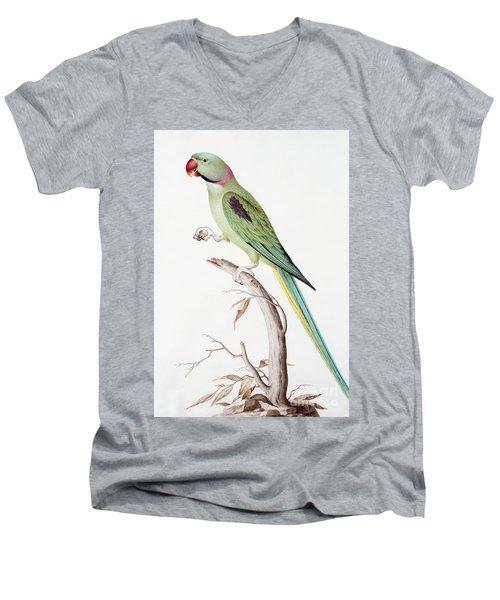 Alexandrine Parakeet Men's V-Neck T-Shirt by Nicolas Robert