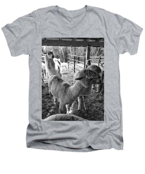 Alpaca Meeting  Men's V-Neck T-Shirt