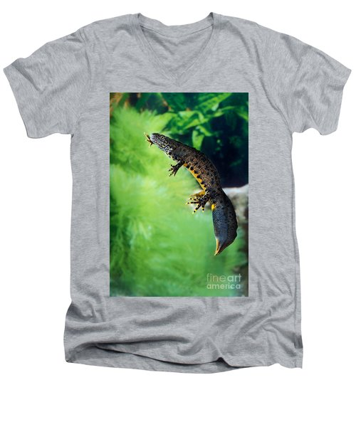 Alpine Newt Triturus Alpestris Men's V-Neck T-Shirt by Gerard Lacz