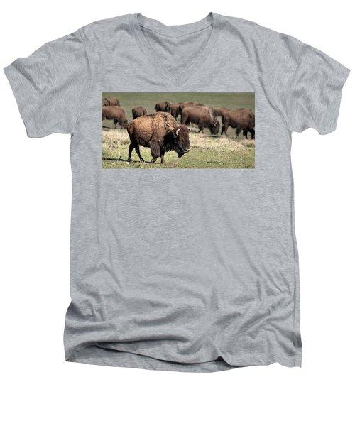 American Bison 5 Men's V-Neck T-Shirt