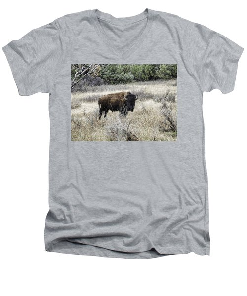 American Bison Men's V-Neck T-Shirt