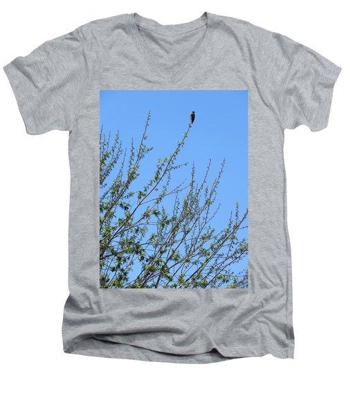 American Kestrel Atop Pecan Tree Men's V-Neck T-Shirt