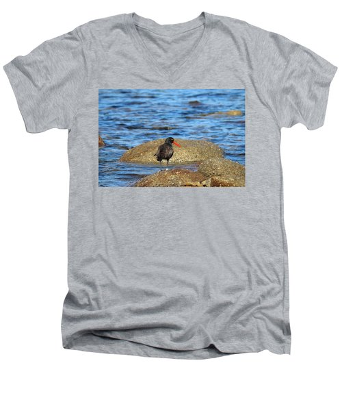 American Oystercatcher  Men's V-Neck T-Shirt