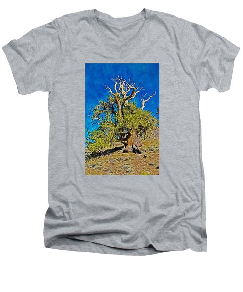 Ancient Bristlecone Pine Men's V-Neck T-Shirt