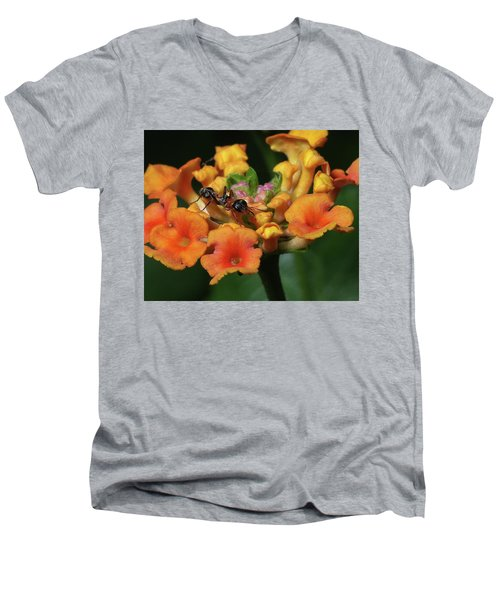 Ant On Plant  Men's V-Neck T-Shirt by Richard Rizzo