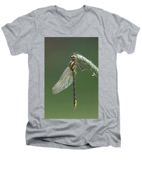 Ashy Or Dusky Clubtail Men's V-Neck T-Shirt