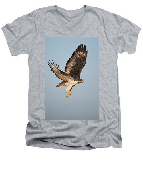 Augur Buzzard Buteo Augur Flying Men's V-Neck T-Shirt by Panoramic Images