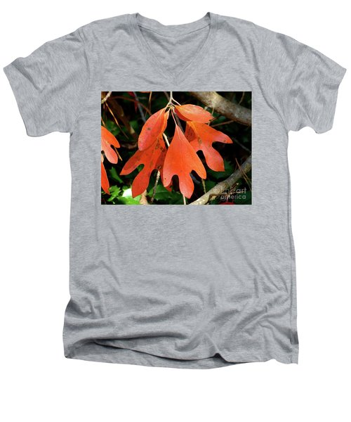 Autumn Sassafras Leaves Men's V-Neck T-Shirt