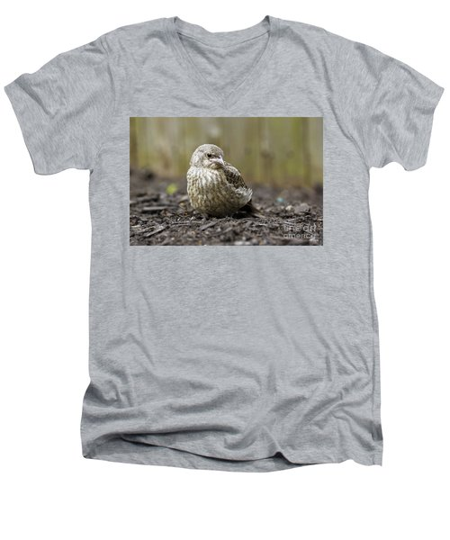 Men's V-Neck T-Shirt featuring the photograph Baby Bird by Denise Pohl