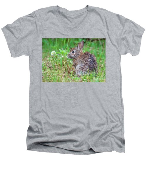 Baby Bunny Men's V-Neck T-Shirt