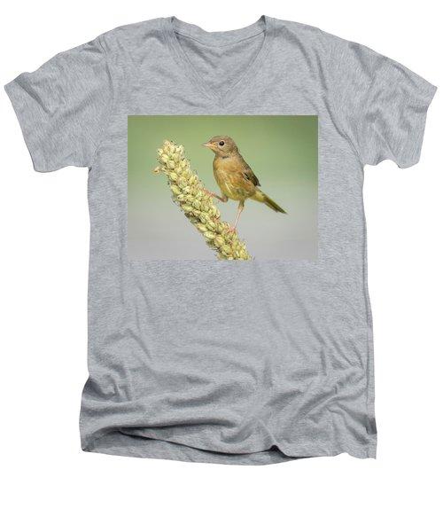 Baby Common Yellow Throat Warbler Men's V-Neck T-Shirt