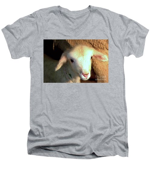 Baby Lamb Men's V-Neck T-Shirt