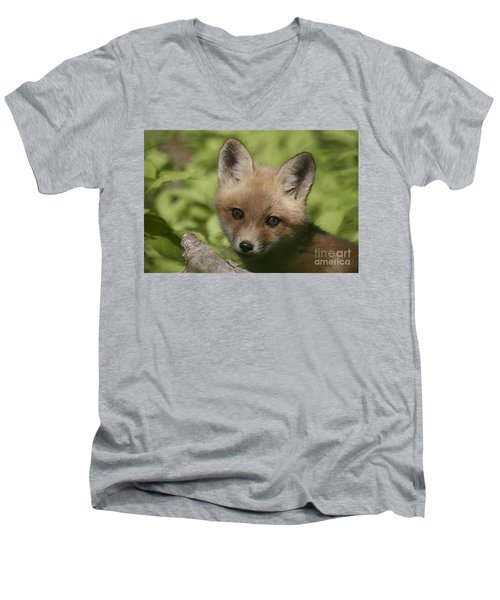 Baby Red Fox Men's V-Neck T-Shirt