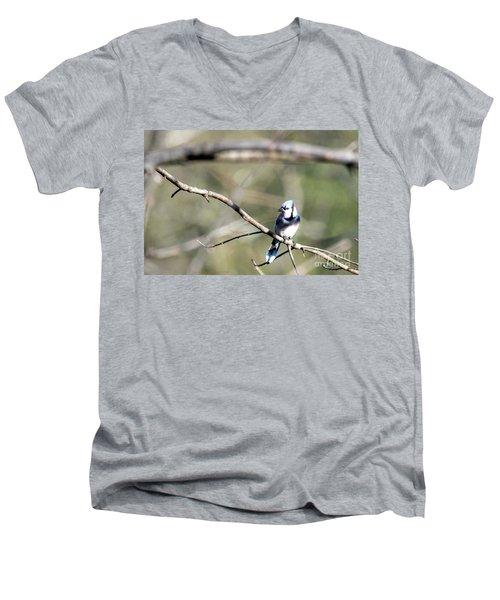 Backyard Blue Jay Men's V-Neck T-Shirt