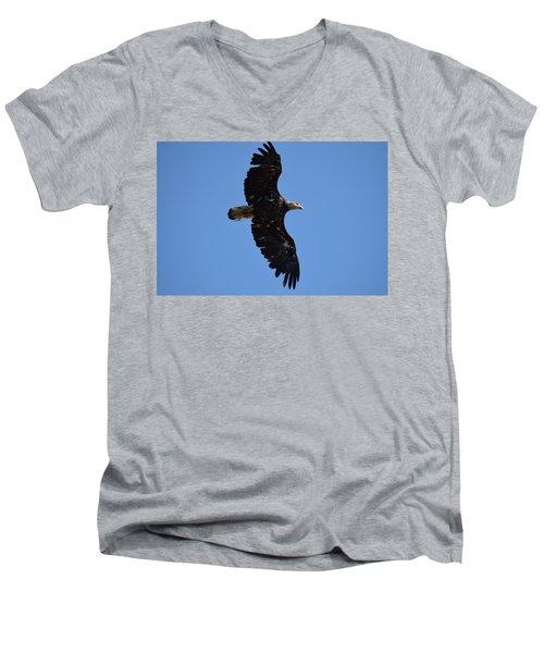 Bald Eagle Juvenile Soaring Men's V-Neck T-Shirt