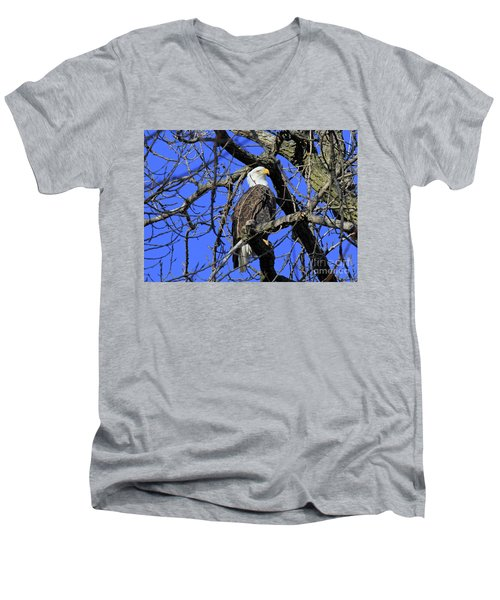 Men's V-Neck T-Shirt featuring the photograph Bald Eagle by Paula Guttilla