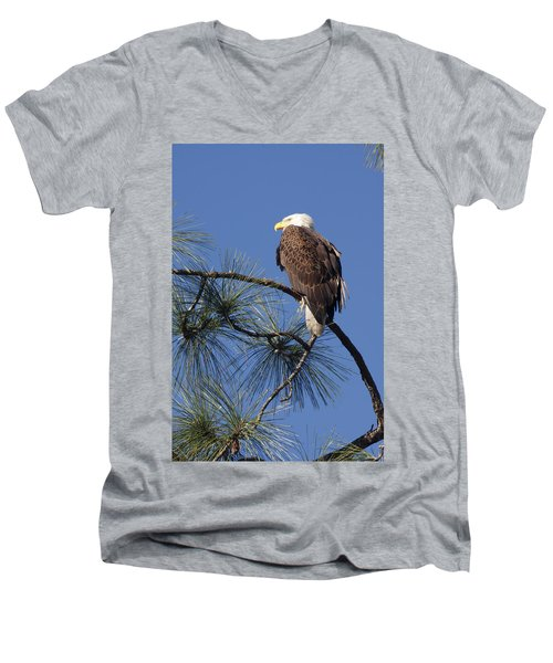 Bald Eagle Men's V-Neck T-Shirt by Sally Weigand