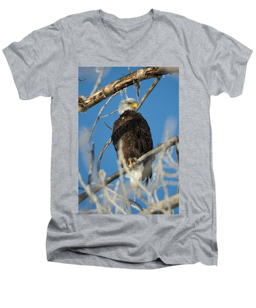 Bald Eagle With Pogo Nip Men's V-Neck T-Shirt