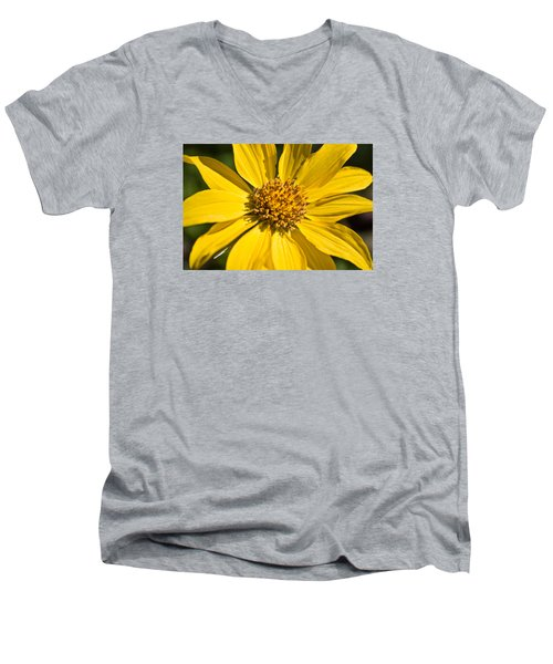 Balsamroot 2 Men's V-Neck T-Shirt