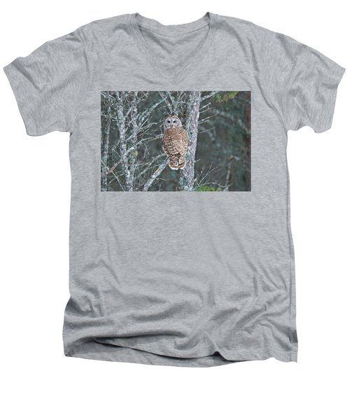 Barred Owl 1396 Men's V-Neck T-Shirt by Michael Peychich