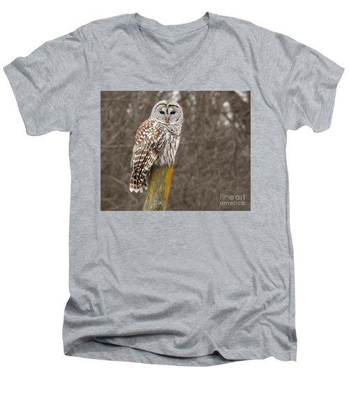 Barred Owl Men's V-Neck T-Shirt by Kathy M Krause