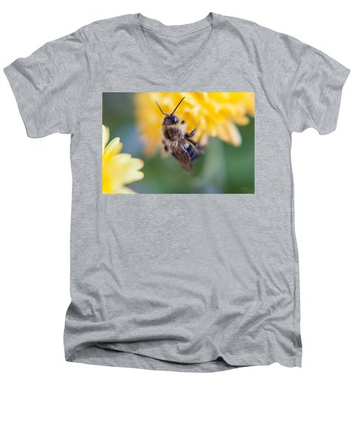 Beautiful Bee Men's V-Neck T-Shirt