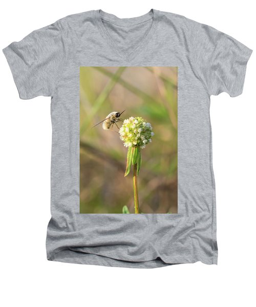 Bee Fly On A Wildflower Men's V-Neck T-Shirt