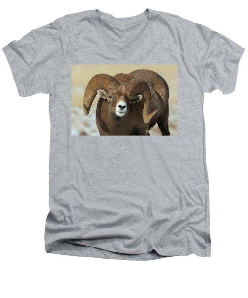 Bighorn Ram In Montana Men's V-Neck T-Shirt