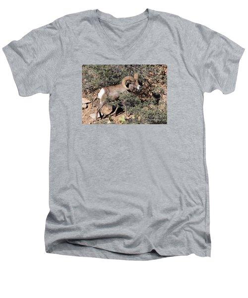 Bighorn Ram Men's V-Neck T-Shirt