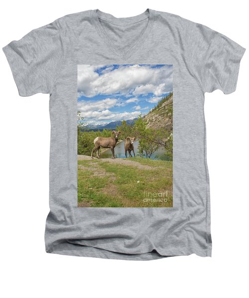 Bighorn Sheep In The Rocky Mountains Men's V-Neck T-Shirt by Patricia Hofmeester