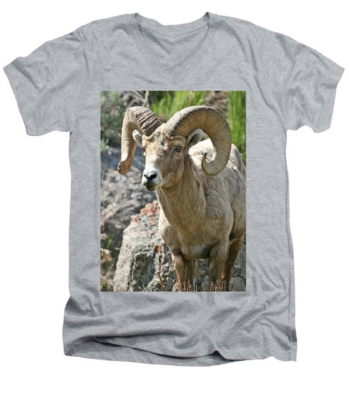 Men's V-Neck T-Shirt featuring the photograph Bighorn Sheep by Wesley Aston