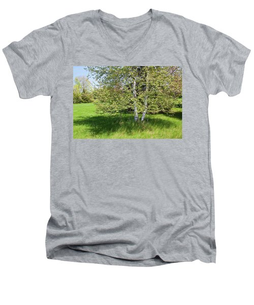 Birch Tree Men's V-Neck T-Shirt