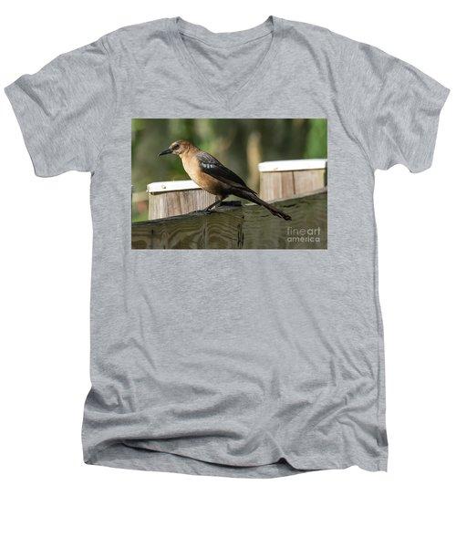 Grackle Men's V-Neck T-Shirt