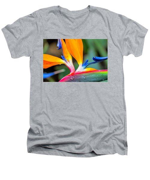 Bird Of Paradise After The Rain Men's V-Neck T-Shirt