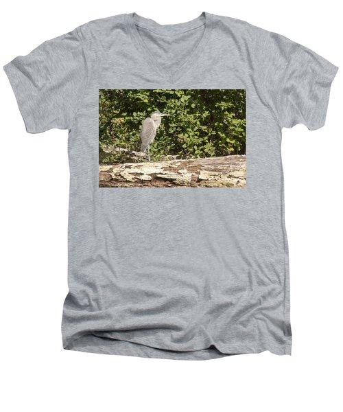 Bird On A Log Men's V-Neck T-Shirt
