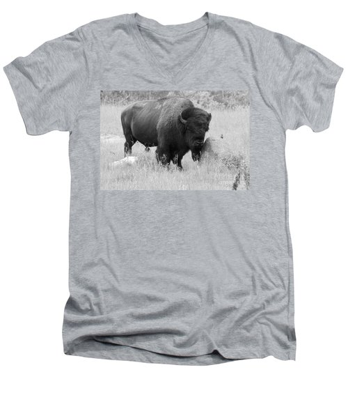 Bison And Buffalo Men's V-Neck T-Shirt