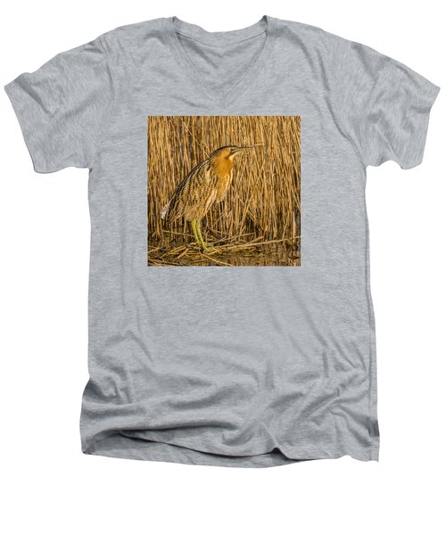 Bittern Botaurus Stellaris Men's V-Neck T-Shirt