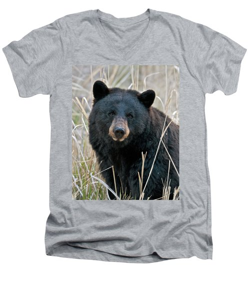 Black Bear Closeup Men's V-Neck T-Shirt