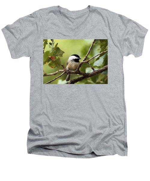 Black Capped Chickadee On Branch Men's V-Neck T-Shirt by Sheila Brown
