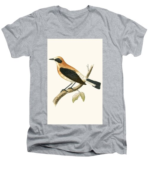 Black Eared Wheatear Men's V-Neck T-Shirt